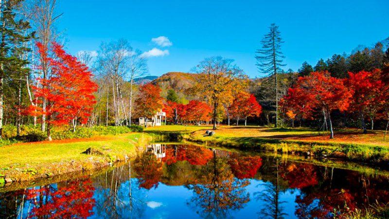 紅葉と楓の違いは?紅葉狩りの正しい意味とは?